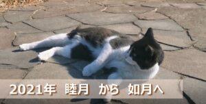 cat_eyecatch_new1